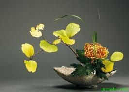hoa cung Phat 5