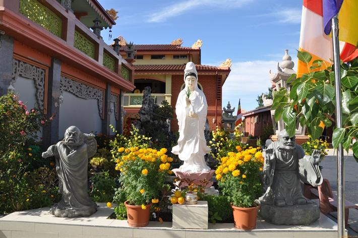 Vuon hoa xuan Quang Duc 2016 (68)