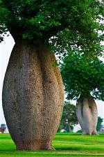 nature-toborochi-tree