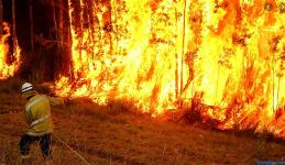 bush-fire-in-nsw-2019-9-