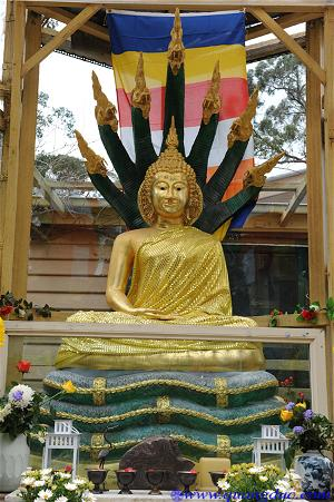 40 yeara_Buddhist Discussion Centre in Upwey (67)