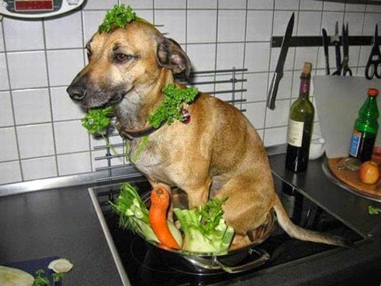 Kết quả hình ảnh cho ăn thịt chó là ác