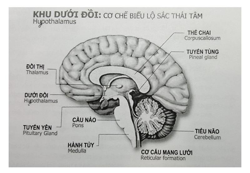 thien-duoi-anh-sang-khoa-hoc-5-su co hang nhu