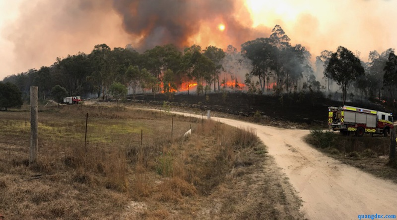 Bush fire in nsw--2019 (1)